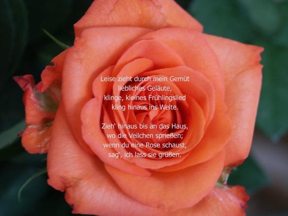 Gedicht: Heinrich Heine