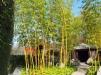 Bambusgarten