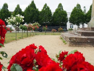Putbus und seine Rosen