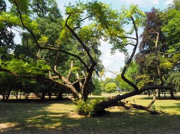 Bizarres Wachstum im Nells-Park