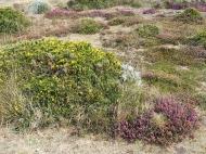 Pflanzen am Cap